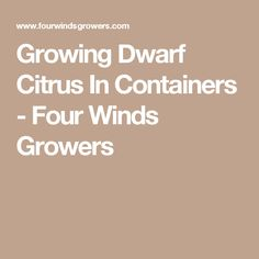 Growing Dwarf Citrus In Containers - Four Winds Growers