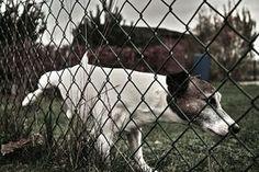 Repelente caseiro para combater xixi canino em locais inadequados