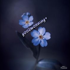 Good Morning Images Flowers, Buen Dia, Messages