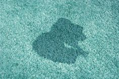 How to Remove Old Urine Stains from a Carpet (If the peroxide is not suitable for use on your carpet, apply a laundry pretreatment spray as a substitute.)