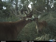 Aw, check out this buck and doe in North Dakota.
