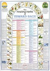 Bach thought of illness as the result of a conflict between the purposes of the soul and the personality's actions and outlook - Bach Flower Remedy Wall Chart (Ready-reference Bach flower essence poster)
