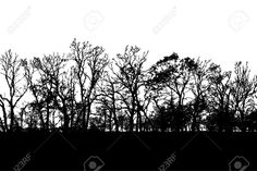 11838528-Wild-looking-tree-lined-horizon-silhouette-vector-Stock-Vector-treeline-silhouette-forest.jpg (1300×865)