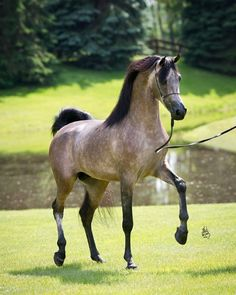 Beautiful horse, colour and movement