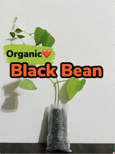 Black Bean Plant, Okra Plant, Buy Plants Online, Growing Plants Indoors, Grow Your Own Food, Live Plants, Black Beans, Organic Gardening, Indoor Plants