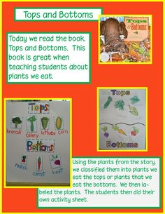 "Golden Gang Kindergarten - Tops and Bottoms for teaching students about plants we eat. Love this blog...she makes it so easy and provides a ""pin-it"" button! Thanks for sharing!"