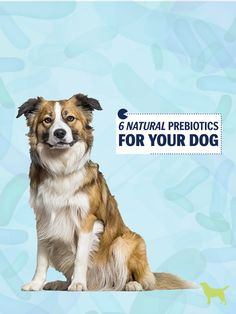 6 Natural Prebiotics For Dogs: Why Probiotics Aren't Enough!
