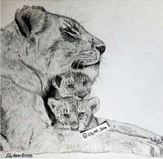 lioness and 2 cubs drawings - חיפוש ב-Google