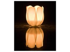 Tulip candle holder by sfx