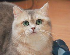 Губки бантиком #котгеннадий by @deborkader automatic cat litter box  cat cats kitty cute catlover catsofinstagram catcam instacat catstagram catsagram lovecats cat product reviews