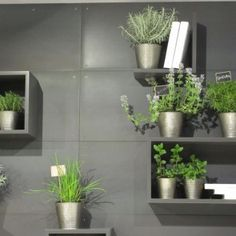 Interni Milano #isaloni #2015 #green #wall with #magnetic #shelves by #rondadesign