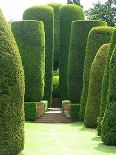 Fabulous clipped yews - acourseofevents: (via Pinterest)