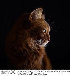 Kio/PicturePress/StudioX portrait chat