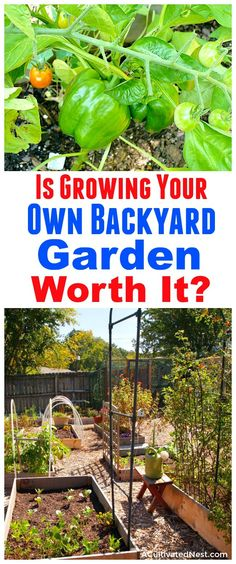 Is Growing Your Own Backyard Garden Worth It?- Gardening is a great way to grow your own all-natural food. But is it worth the money and time? I cover the expenses and benefits of growing your own backyard garden, and share my handy tips for how to start a garden the frugal way! | ways to save money on your garden, how to start a garden for cheap, frugal gardening tips, gardening pros and cons #frugal #growYourOwn #vegetableGardening #backyardGarden
