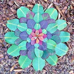 Natural Leaf Mandala https://www.facebook.com/pages/Healthy-Vibrant-You/381747648567846