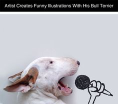 Brazilian artist Rafael Mantesso uses silly illustrations and props to create funny photos with his Bull Terrier, Jimmy.