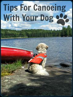 Tips For Canoeing With Your Dog