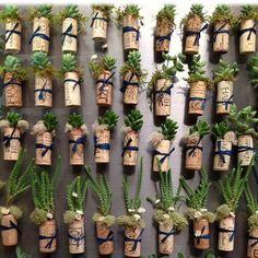 50 Succulent Cork Magnets - DIY kit - Wedding Favors, Repurposed Wine Corks, Mini Garden, Party Favor, Gift
