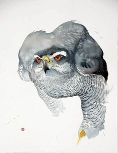 Karl Martens Goshawk (Unframed Signed Watercolour on Arches Watercolour paper 35 x 39 in x cms Arches Watercolor Paper, Watercolor Bird, Watercolor Animals, Karl Martens, Detailed Paintings, Bird Artwork, Owl Art, Wildlife Art, Bird Prints
