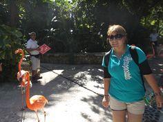 Paseo de los Flamingos