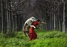 WHO IS THE GIRL IN RED? Yes, this is a real photo of Little Red Riding Hood and the Wolf. I first thought it was a digital photomontage, but Shlomi Nissim is a pro wildlife photographer who confirms. Alan Watts, She Wolf, Wolf Girl, Big Bad Wolf, Modern Metropolis, Red Hood, Illustrations, Red Riding Hood, Best Photographers