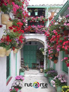 Patios de Córdoba. Uno de los que viven nuestros #clicker