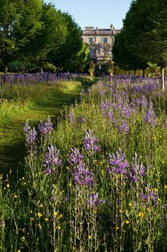 At Home With Prince Charles: A Garden Ramble - Gardenista Photographs by Andrew Lawson. Wild Flower Meadow, Wild Flowers, Purple Flowers, Exotic Flowers, Fresh Flowers, English Country Gardens, English Countryside, Highgrove Garden, Landscape Design
