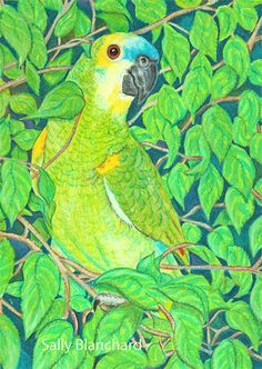 Sally Blanchard - Prismacolor Pencil Drawing Commissioned Portrait Blue-front Amazon in Leaves
