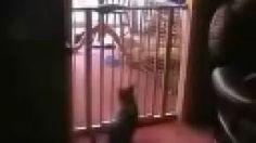 cat fence jump fail - YouTube