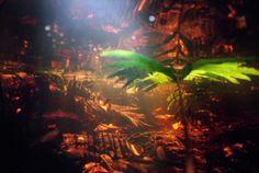 etonnantes photographies sous marines des marais de floride par karen glaser 9   Etonnantes photographies sous marines des marais de Floride...