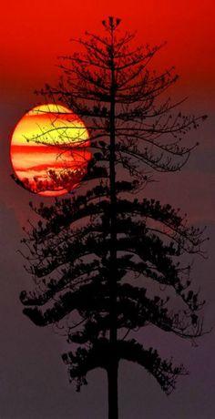 Sunset or Sunrise Photography Image Nature, Foto Poster, Beautiful Sunrise, Amazing Nature, Belle Photo, Pretty Pictures, Beautiful Landscapes, Beautiful Scenery, Beautiful World
