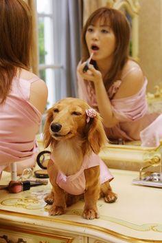 Hmmm... that lipstick looks okay on you mom, but I think I'd like something a little zazzier! #dachshund