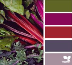 Design Seeds has great color combos derived from photographs. It's an excellent resource for designers from any discipline—graphic, interior, industrial, etc. Colour Pallette, Color Palate, Colour Schemes, Color Combinations, Design Seeds, World Of Color, Color Stories, Color Swatches, Color Theory