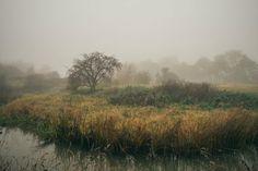 The fog.  #travel #picoftheday #photooftheday #landscape #xpro1 #fuji #fujifilm #england #uk #fujixpro1 #repostmyfuji #countryside #oxford #instagram #fog #mist