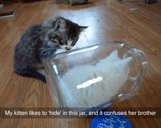 This kitten likes to hide in a jar... - more at http://www.thelolempire.com