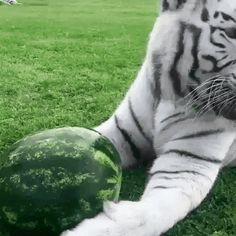 No! It's my!