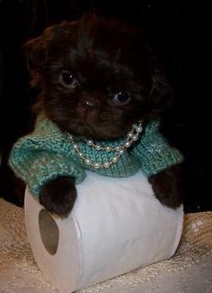 Please don't squeeze the TP! Mady our baby Shih Tzu. ~