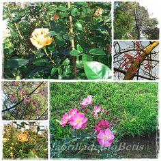 alaorilladelrioBetis flores del parque de maria luisa