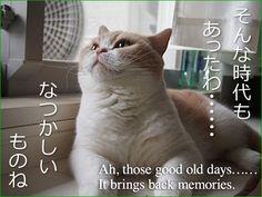 小雪の子猫時代ついに公開!