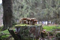 Mushrooms, Forest Mushrooms