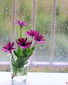 Good Morning Pictures, Images, Photos - Page 3 Rainy Good Morning, Good Morning Happy Monday, Good Morning Sister, Latest Good Morning, Good Morning Images Flowers, Good Morning Picture, Morning Pictures, Morning Pics, Good Morning Messages