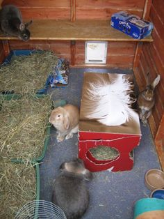 Inside Shed. I love the idea of the small dog door. would keep heat in in the winter but how to teach rabbits to use it.