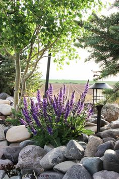Farmhouse Landscaping Ideas by The Wood Grain Cottage