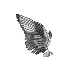 *The Graphics Fairy*: Angels and Fairies ❤ liked on Polyvore featuring wings, backgrounds, fillers, drawings, bird, quotes, text, phrase and saying