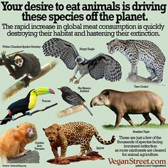Meat production is destroying the habitat of other animals and the ecosystem. Go vegan to save the animals and the planet. #endfactoryfarming #vegan4theanimals