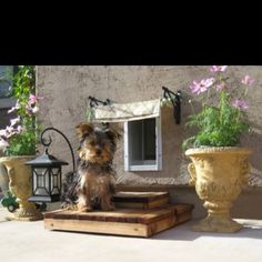 I want to do this to our doggie door-so cute!!!