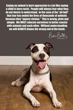 The Truth About Pit Bulls - FB