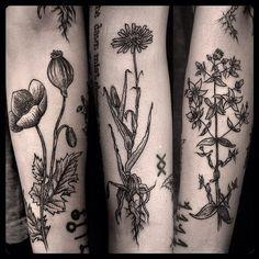 Medicinal herbs sleeve by @lucitattoos #tattoo #tatouageroyal #tattooworkers #tattoolookbook #tattoomontreal #quebectattooshops #greatwhitenorthtattoos #instattoogram #ladytattooers #darkartist #dotworkers #blacktattoos #blackworkers #medicinalherbs