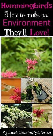 Hummingbirds - How To Make An Environment They'll Love on MyHumbleHomeandGarden.com