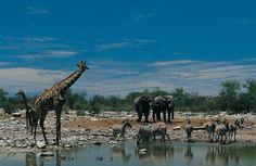De 50 mooiste plaatsen in Afrika